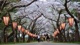 Hirosaki Sakura Matsuri 5/4 @ 2PM